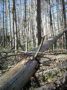 Waldbrandgefahr durch trockenen Wald